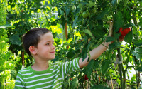 О новом школьном предмете земледелие