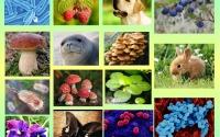 Где требуется ЕГЭ по биологии
